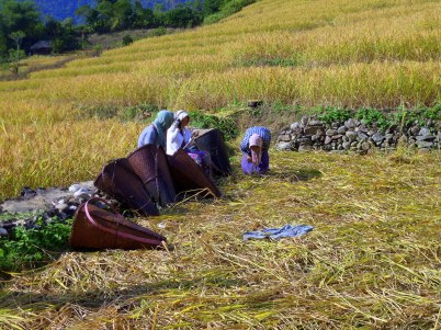 Like most places in Arunachal Pradesh, families and neighbours help each other out at the fields.